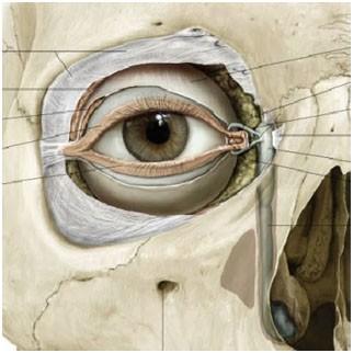 Trnenkanal verstopft Ursachen - Symptome - Therapie